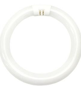 GE-Lighting-33774-Cool-White-8-Inch-Diameter-Circline-Fluorescent-T9-Bulb-22-Watt-0